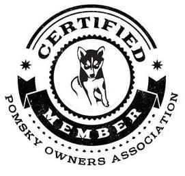 Certified member of Pomsky Owners Association