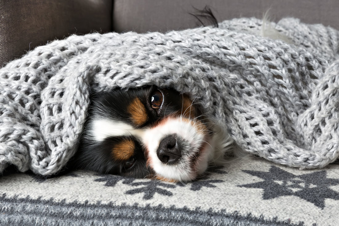 cute dog laying under a gray wooven blanket