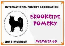 International Pomsky Association Brookside Pomsky